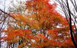 夕張の紅葉(滝の上公園)Vol.1