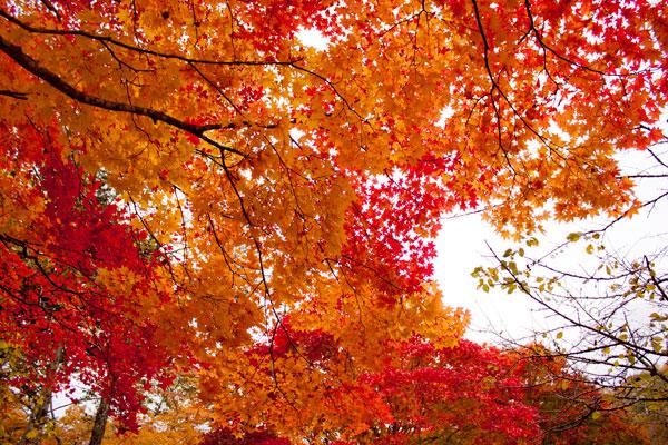夕張の紅葉3(滝の上公園)