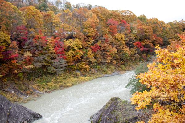 夕張の紅葉(滝の上公園)夕張川と紅葉2