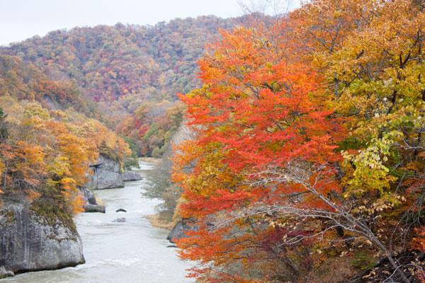 夕張の紅葉(滝の上公園)夕張川と紅葉1
