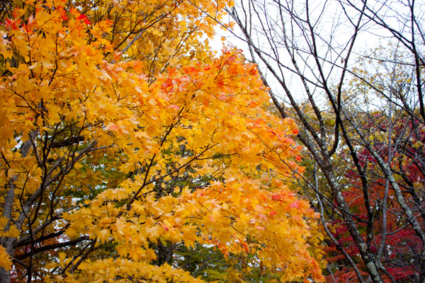 夕張(滝の上公園)の紅葉