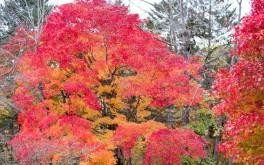 夕張の紅葉(滝の上公園)Vol.3